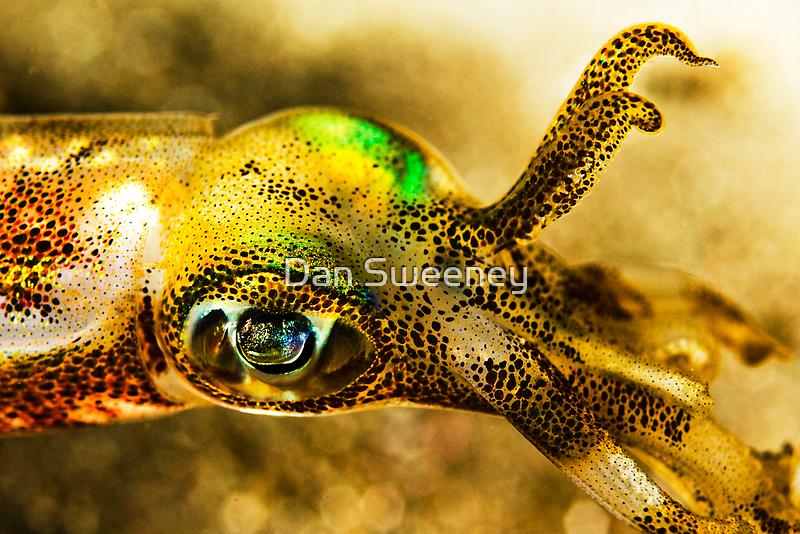 Squid Eye by Dan Sweeney