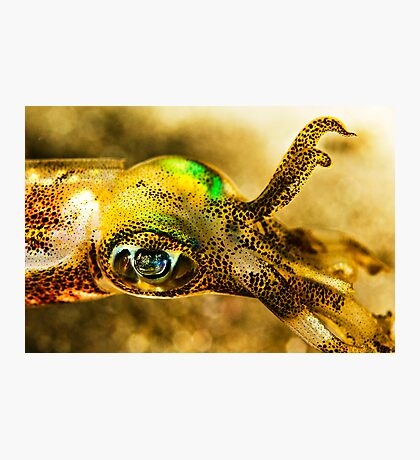 Squid Eye Photographic Print