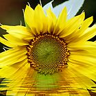 If we can not find a sun it's always sunflower ! by LudaNayvelt