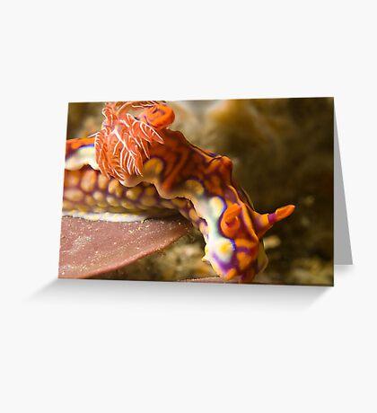 Miamira Magnifica Nudibranch Greeting Card