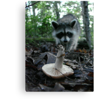 Wild Mushrooming Raccoon Canvas Print