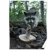 Wild Mushrooming Raccoon Poster