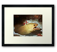 Green Moray Framed Print
