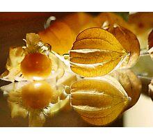 THE GOOSEBERRY - Physalis Solanaceae Photographic Print