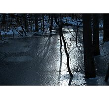 Trees and Ice Photographic Print