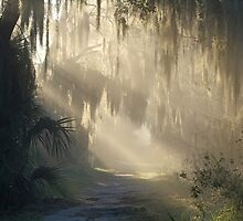 A Ray of Florida Sunshine !! by jozi1