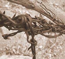 Barbwire by FOTOX