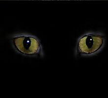 cats eyes by Diane Giusa