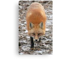 What are you looking at?? Canvas Print