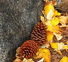 Fall Pine Cones  by Elaine Bawden