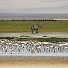 Ngorongoro Crater Scene by Nickolay Stanev