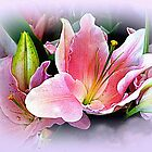 Lily Sunset (200%) by Elaine Bawden