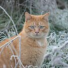 Ollie in the Frosty Field by Pamela Jayne Smith