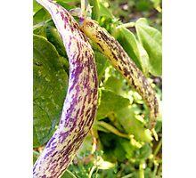 snake beans Photographic Print