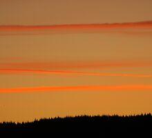 Orange Ribbons in the Sky by Abigail Allardyce