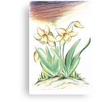 Glorious Daffodils Canvas Print