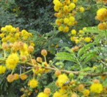Thorn tree blossoms Sticker