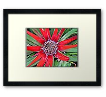 Although this looks like a flower, it is in fact the leaves turning red to give this impression Framed Print