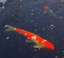 Red and White Koi by patti haskins