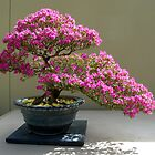 Bonsai Azalea by Marjorie Wallace