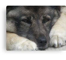 sad puppy Canvas Print