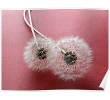 Puffballs on Red Paper Poster