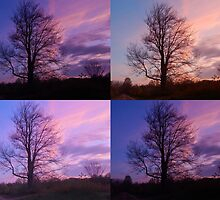 Morning tree mosaic by Karen Cook