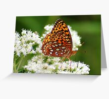 Great Spangled Fritillary on White Flowers Greeting Card