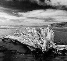 Driftwood, New Zealand by Norman Repacholi