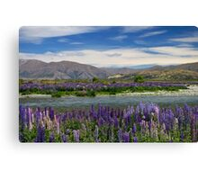 Lupin lined Ahuriri River - NZ Canvas Print