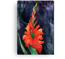 watercolor drawing of red gladiolus Canvas Print
