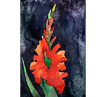 watercolor drawing of red gladiolus Photographic Print