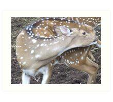 Itchy deer Art Print