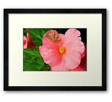 Refuge on a Pink Petal Framed Print