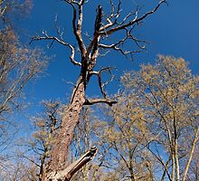 Old dead trunk decayed tree by Arletta Cwalina