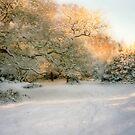 Snowy Sunset by Ann Garrett