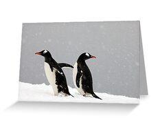 Gentoo Penguins, Antarctic Peninsula Greeting Card