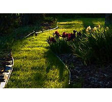 Green Garden Path - Impressions Of Spring Photographic Print