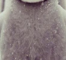 cutest penguin  Sticker