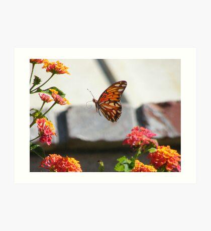 Golf Fritillary Butterfly in flight.... Art Print