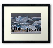 Gentoo Penguin Colony, Antarctic Peninsula Framed Print
