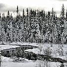 White Winter River by terrebo