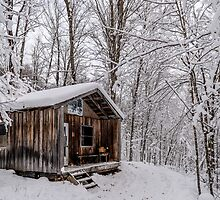 The Cabin in the Woods by Roger  Mackertich