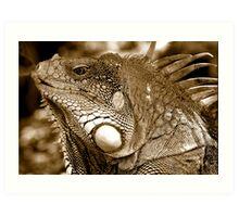 Big Iguana Art Print