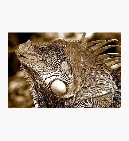 Big Iguana Photographic Print
