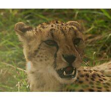Angry Cheetah Photographic Print