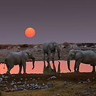 SUNSET WITH ELEPHANTS by Michael Sheridan