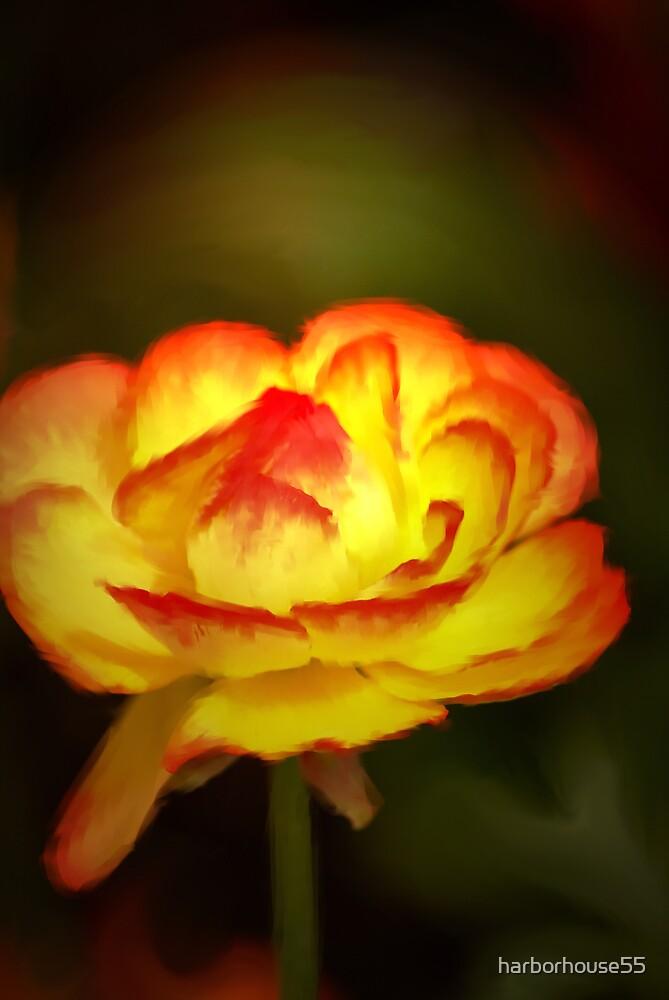Yellow Glow by harborhouse55