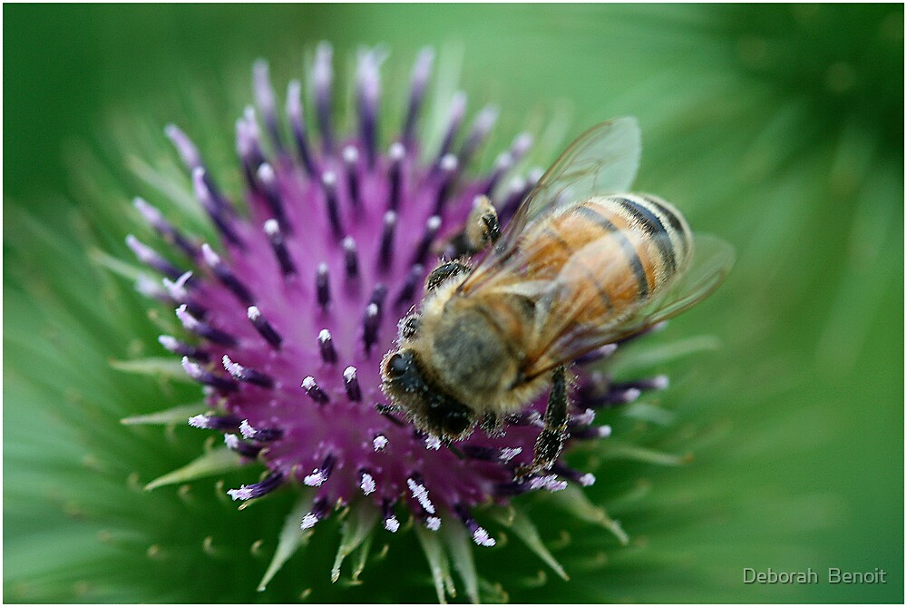 Thistle and Bee by Deborah  Benoit