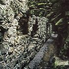 Roofed area which was sewer tunnel beside dormitory Ruins of abbey Rievaulx North Yorkshire England 198406020072 by Fred Mitchell